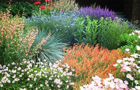 Xeriscape plants
